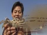 致富经:阳澄湖蟹状元是如何炼成的 11月30日