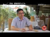苗准美食 2017.04.04 - 厦门电视台 00:13:44