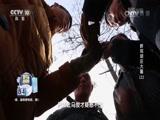新郑胡庄大墓(上) 00:36:49