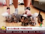 给十只小猫拍合影 手忙脚乱状况百出
