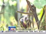 厦视新闻 2017.4.24 - 厦门电视台 00:23:03