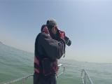 [港珠澳大桥]造大桥也要保护白海豚