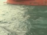 [港珠澳大桥]为建港珠澳  再造了四个人工岛