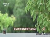 《致富经》 20170810 痴汉两招 破解黄鳝财富密码