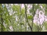 台海视频_XM专题策划_白鹭儿 00:05:10