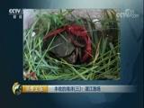 《消费主张》 20170920 丰收的海洋(三):湛江渔场