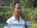 """[贵州新闻联播]关岭:三千余亩""""坡贡小黄姜""""喜迎丰收"""
