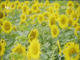 锄山村:农创文旅新探索 十分关注 2017.11.20 - 厦门电视台 00:18:42