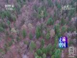 重生的山林 走遍中国 2017.11.28 - 中央电视台 00:25:50