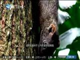 新闻斗阵讲 2018.02.05 - 厦门卫视 00:25:06