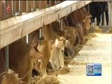 [贵州新闻联播]关岭牛肉走进贵阳生鲜超市