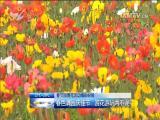 春节园博苑活动精彩纷呈:春色满园庆佳节 赏花、游玩两不误
