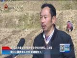[贵州新闻联播]金沙:产业结构调整特色化 规模化