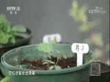 [交换空间]空间榜样 洪青的温室花园