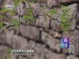 [走遍中国]经济林木创效益