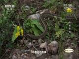 崆峒奇观(上) 地理中国 2018.04.11 - 中央电视台 00:24:09