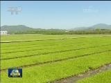 [视频]一季度粮食生产开局良好