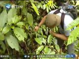 东南亚观察 2018.5.5 - 厦门卫视 00:09:47