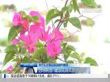 午间新闻广场 2018.5.23 - 厦门电视台 00:21:24