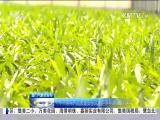 特区新闻广场 2018.5.31 - 厦门电视台 00:24:09