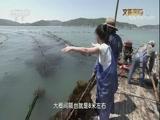 海边渔家生活 00:48:51