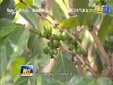 创业新农人:因为热爱 所以专注 视点 2018.6.23 - 厦门电视台 00:14:27