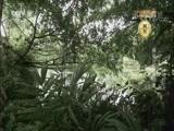 [文明密码]美丽万宁我的家 兴隆热带花园