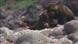 [自然传奇]《北海道棕熊》预告