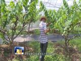 创新型果农带动果园发展 视点 2018.08.04 - 厦门电视台 00:15:19