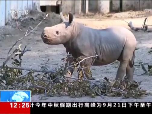 """[新闻30分]美国 黑犀牛宝宝正式""""亮相"""""""