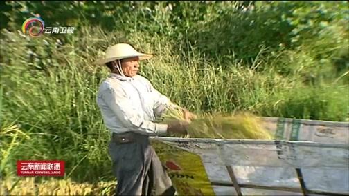 [云南新闻联播]我们的节日·首届中国农民丰收节:丰收的味道 喜悦的心情