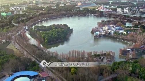 《航拍中国》 20181201 上海 精编版