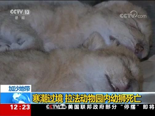 [新闻30分]加沙地带 寒潮过境 拉法动物园内幼狮死亡