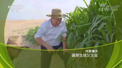 《走近科学》 20190401 菌草生绿又生金