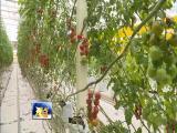 良种良法产良品 促农业增效农民增收 视点 2019.04.27 - 厦门电视台 00:14:50