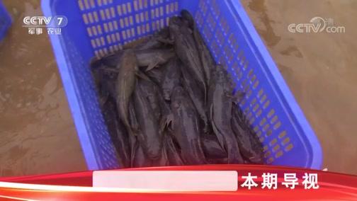 """《科技苑》 20190515 爱钻泥 搭伴养 懒鱼变""""宝鱼"""""""