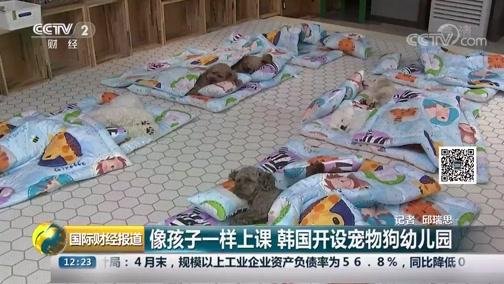 [国际财经报道]像孩子一样上课 韩国开设宠物狗幼儿园