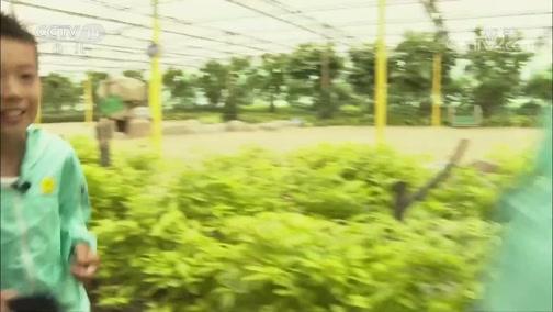 《芝麻开门》 20190608 挑战大现场 植物乐园大挑战