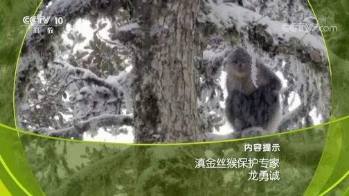 《人物》 20190614 滇金丝猴保护专家 龙勇诚