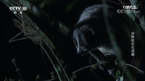 《自然传奇》 20190624 动物的生化武器