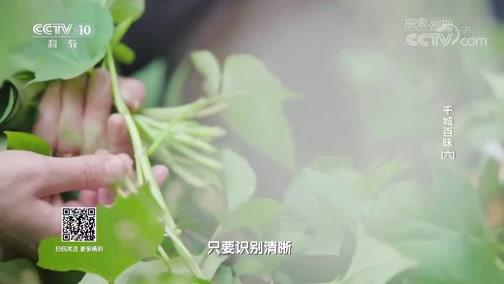 《探索发现》 20190630 千城百味(六)
