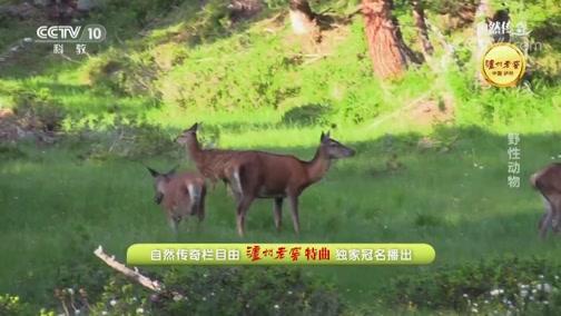 《自然传奇》 20190702 野性动物