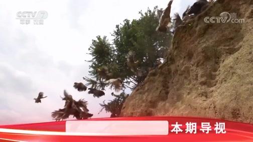 《科技苑》 20190703 吃石头的土鸡变金鸡