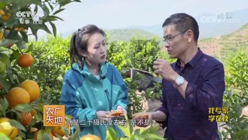 [农广天地]江城产的沃柑口感好 甜度高