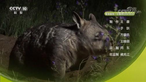 《自然传奇》 20190710 奇妙的动物