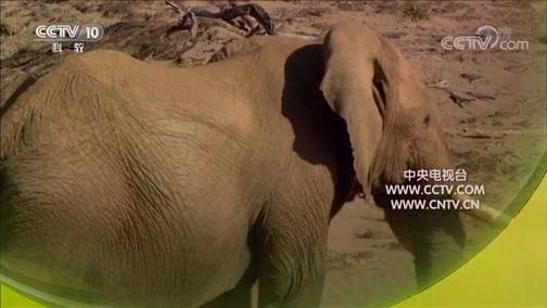 《自然传奇》 20190713 沙漠象的故乡
