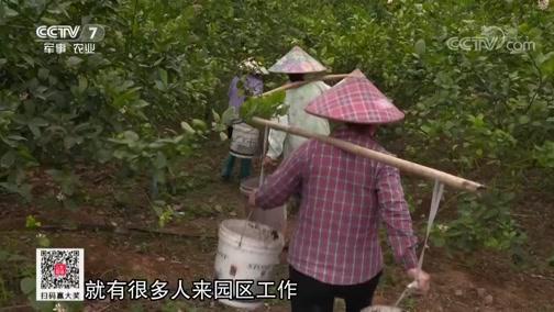 """《乡土》 20190716 全国休闲农业精品地图 """"香""""遇屯昌"""