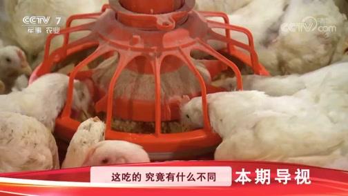 《科技苑》 20190725 高效养成白羽鸡