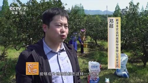 """[农广天地]蒲江县的""""不知火""""声名远播 味美香甜"""