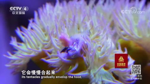 《走遍中国》 20190807 3集系列片《海洋卫士》(3) 我在南海种珊瑚